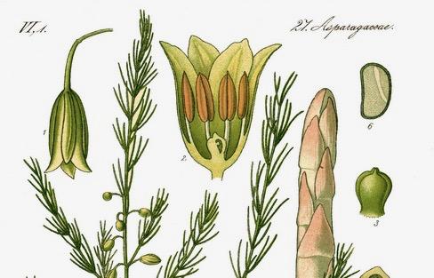 Frühlingskost / 春の味覚