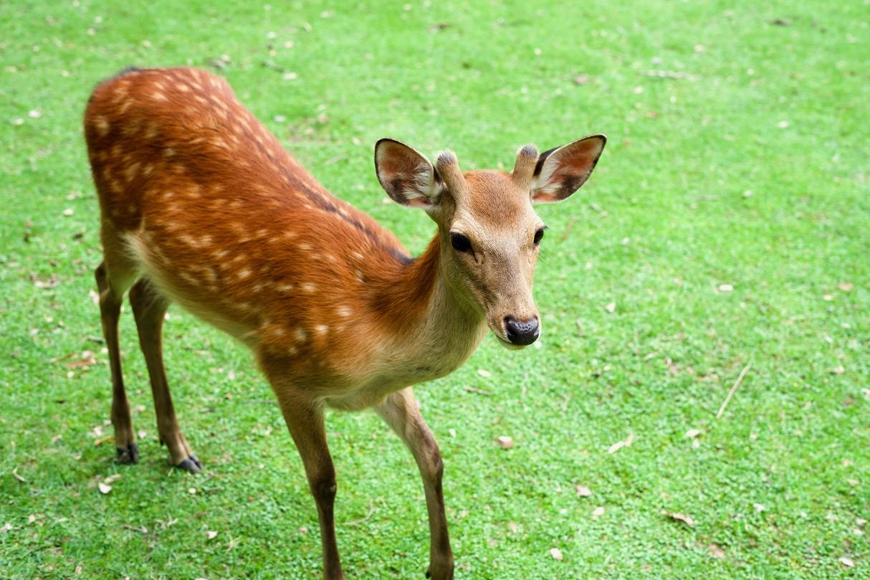 Ein Tag in Nara / 奈良での1日