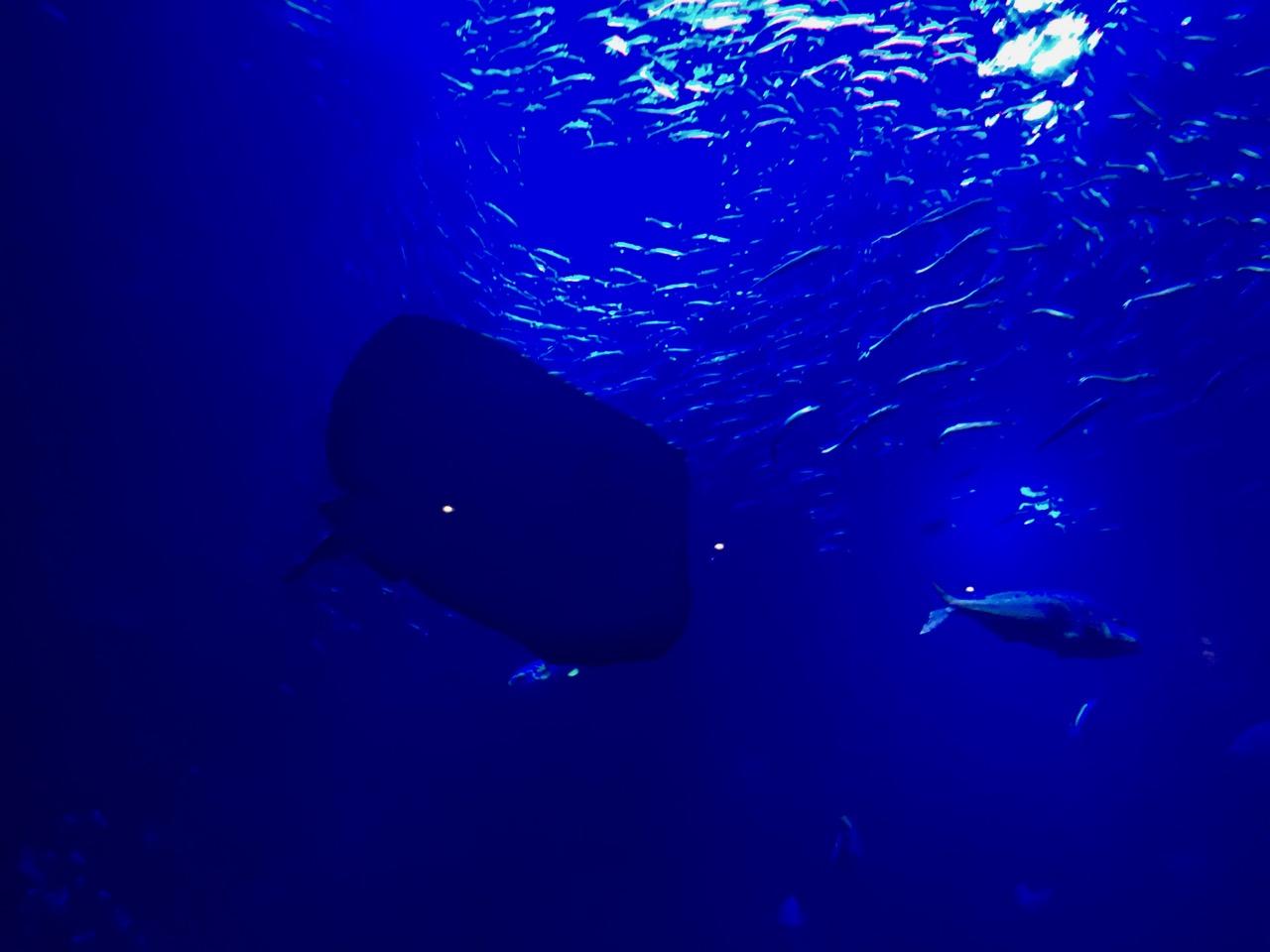 Kyoto Aquarium / 京都水族館