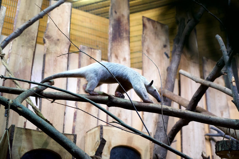 ラトビアの首都リガ② 動物園 〜Reise nach Riga〜